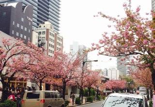 桜,JPG