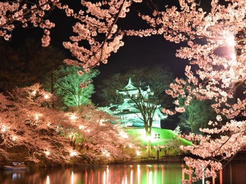 桜 こいけ.jpg