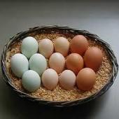 卵.jpeg