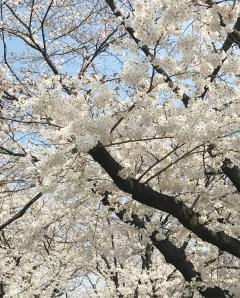 4月スタイリスト公休と定休日のお知らせ